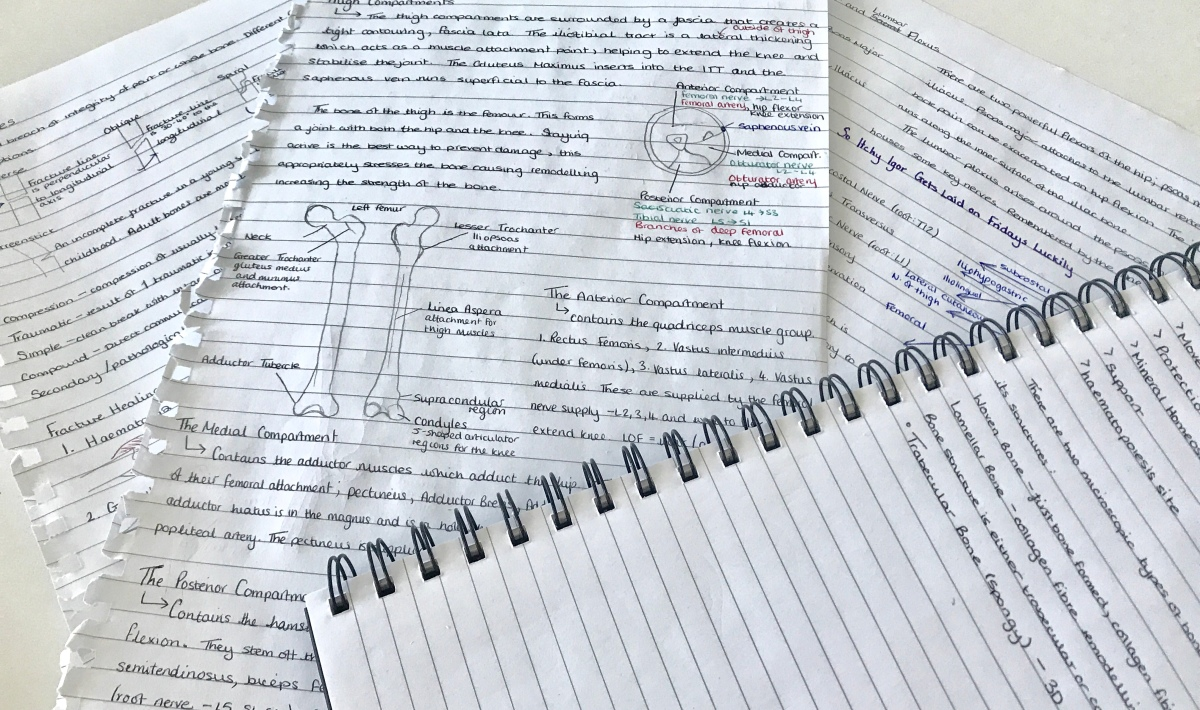 Med School Diaries: Chaos, Cake and Cruciate Ligaments